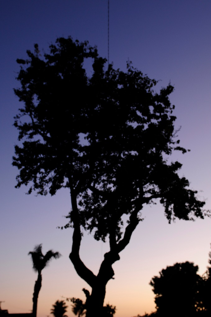 Tree. (photo by Zane S. Spang/A.d.a. Productions © 2009)